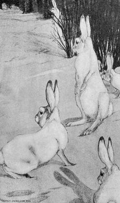 c-bull-rabbits