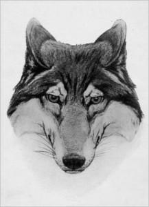 lone-wolf-burhoe