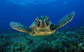 endangered-sea-turtle
