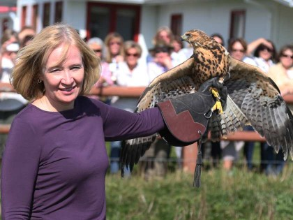 Laureen Harper releasing one of four rescued Swainson's Hawks