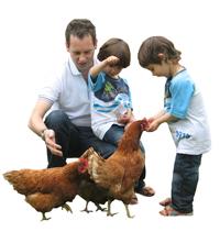 raising-chickens-backyard