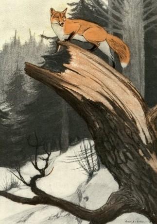 Charles-Livingston-Bull-red-fox