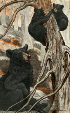 mama-bear-baby-bears-charles-livingston-bull