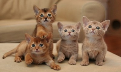 Declawing Cats Humane Declawing Cats is Actually