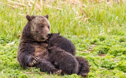 blaze-and-cubs