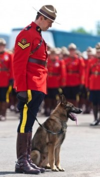 Officer holds slain RCMP Const. David Ross' dog Danny at the funeral procession for the three RCMP officers who were killed in the line of duty last week, at their regimental funeral at the Moncton Coliseum in Moncton, N.B. on Tuesday, June 10, 2014.