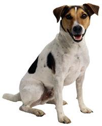 happy_dog1